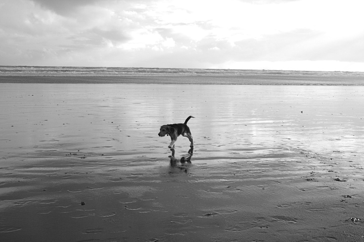 Snoopy at 11months at Muriwai Beach, New Zealand