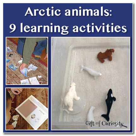 Educational activities covering topics such as camouflage, animal identification, a blubber experiment, and books/short videos showing arctic animals in their habitat. Could be useful for a science experiment or take home kit!