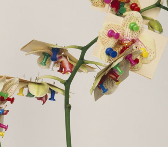 Pawel-Bownik-Reconstructed-Flowers-08