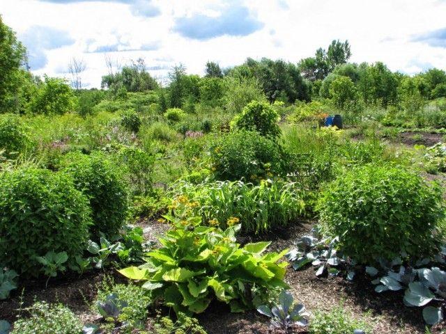 Пермакультура — биологическое земледелие в замкнутой системе. Что такое пермакультура - Ботаничка.ru