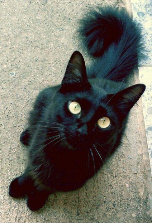 My cat: Ricky