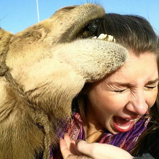 Top 15 des chameaux prise en flagrant délit entrain de faire la grimace