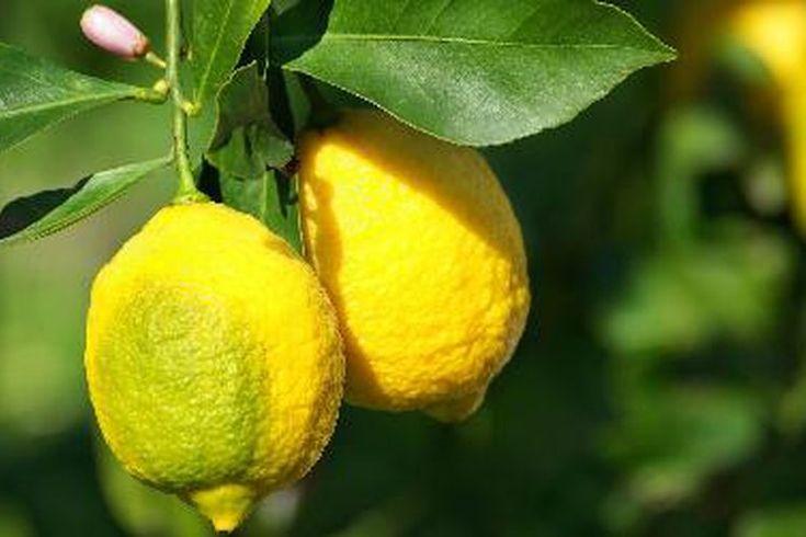 Картинки польза чистой воды с лимоном мирные