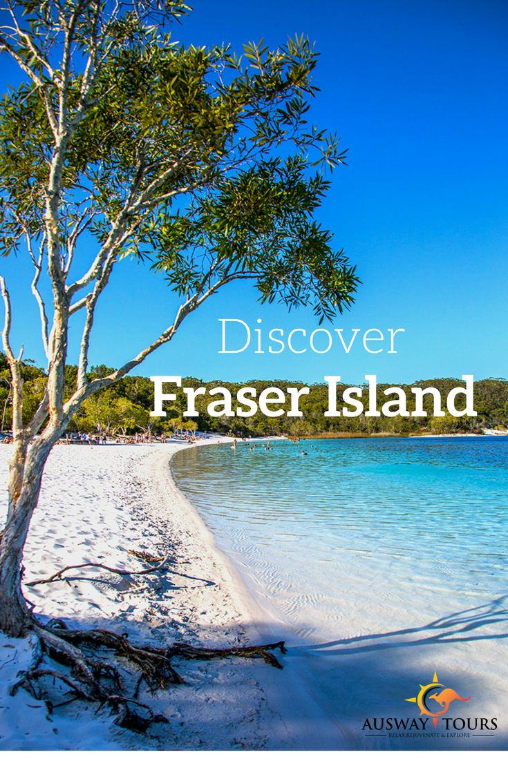 Fraser Island is one place you need to put on your bucket list. Lake Mackenzie is one of many natural lakes on Fraser Island, the sand is a vivid white against the crystal clear turquoise water. Lake McKenzie is a perched lake and is located in the Great Sandy National Park. This stunning lake is a scenic walk 6.2 km southeast of Kingfisher Resort. What is a perched Lake? Forty perched lakes can be found on the Fraser island. These lakes are formed when organic matter, such as leaves, bark…