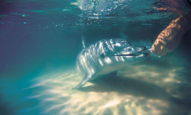 Moreton island - Dolphin feeding