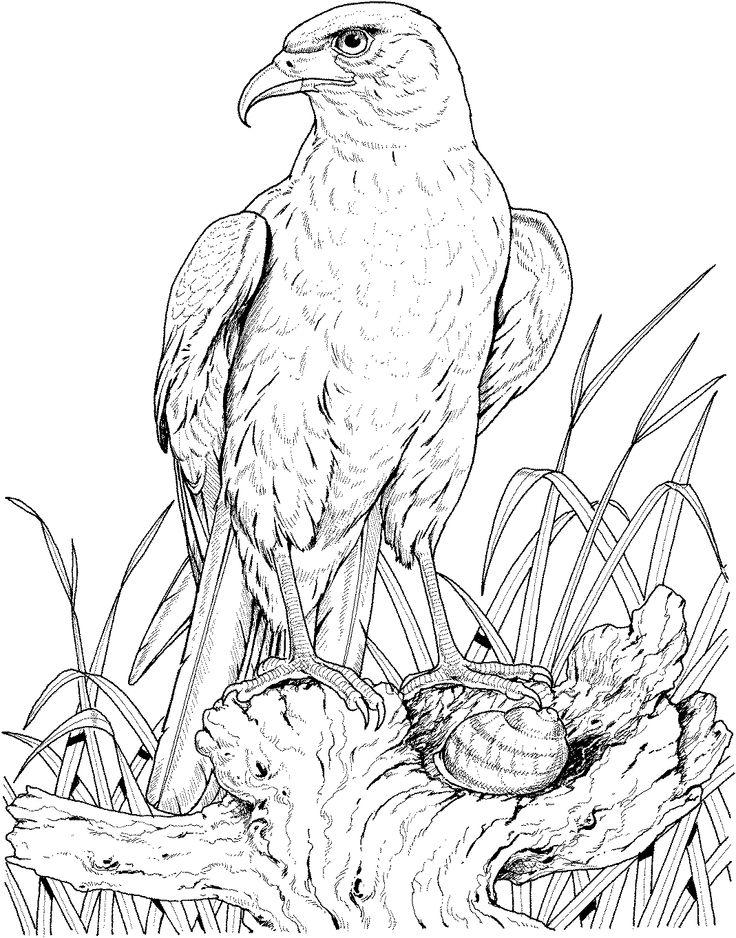 15 mejores imágenes de ART EAGLES en Pinterest   Águilas, Dibujos y ...