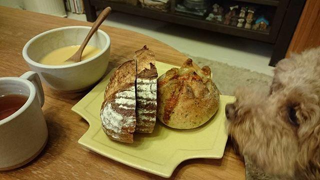 よるごぱん  何だかランチみたいなディナー。  今晩は、お夕飯私の分だけで良いのでお昼出掛けたブーランジュリーヤマシタの🍅とバジルのパンとラコルタのくるみとライ麦のパン。と、大事に取っておいた富士屋ホテルのコーンスープ。  たまには、よるごぱんもいいね。  #よるごぱん #夜ごはん  #ブーランジュリーヤマシタ #トマトとバジルのパン #ラコルタ #くるみとライ麦パン #富士屋ホテル  #コーンスープ #よしざわ窯 #大塚俊広 #益子焼き #今日はオール益子焼き #オレンジルイボスティー #トイプードル #犬 #わんこ #愛犬 #犬ばか部 #犬との暮らし #もこ #癒し犬 #パン好きな犬 #もこセンサー #いやしい犬 #toypoodle #poodle #moco #toypoodlelover #poodlelover #dog