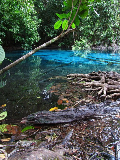Turquoise Lake - Krabi, Thailand by Migration Mark, via Flickr