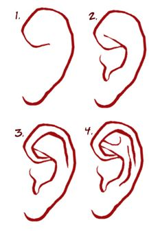 Tutorial to draw an ear (not my creation).