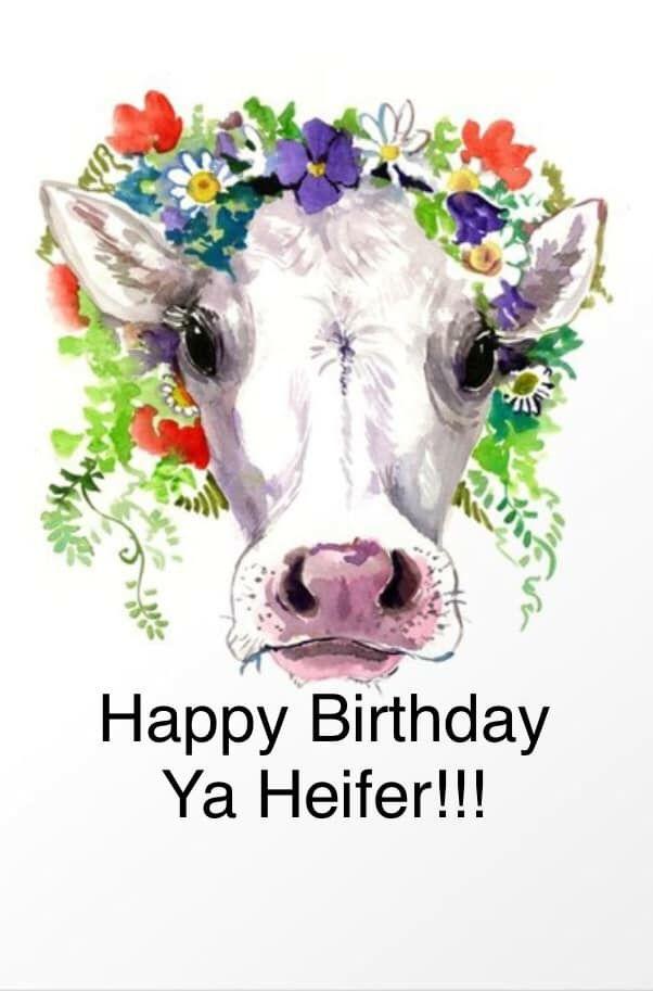 Cow Happy Birthday Meme : happy, birthday, Dorothy, Ellis, Birthday, Head,, Animal