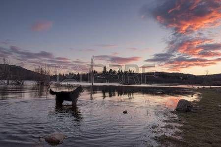 Adorable dog enjoy bathing in the lake at sunset