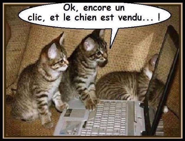Humour – Les chats se débrouillent avec Internet…