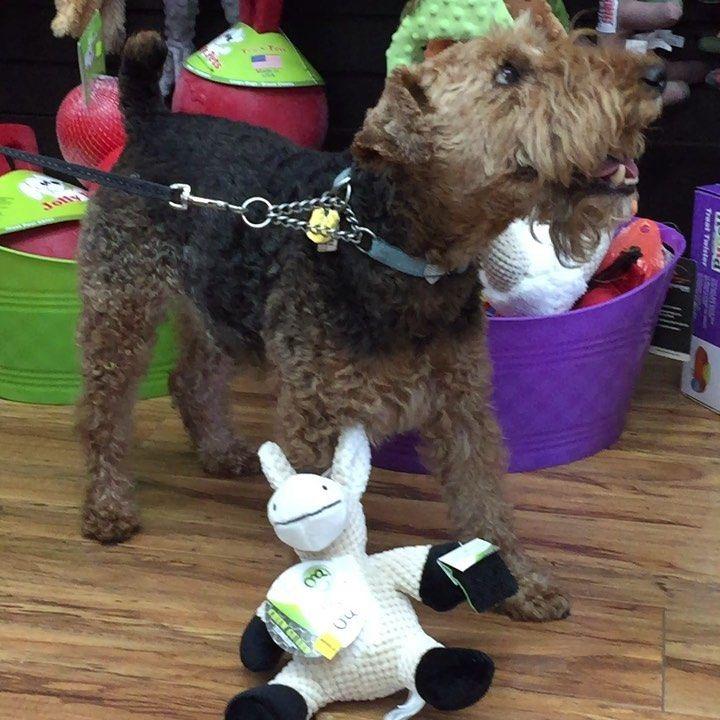 Happy Birthday To Fin Petsnus Petsupplies Petfood Petstore Familyowned Familybusiness Locallyowne Affiliate Pet Supplies Pet Store Food Animals