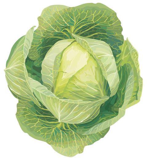 Vegetales - Sonia.2 - Álbuns da web do Picasa