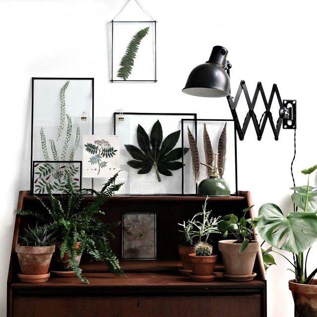 557 besten wohnen bilder auf pinterest zimmerpflanzen for Originelle zimmerpflanzen