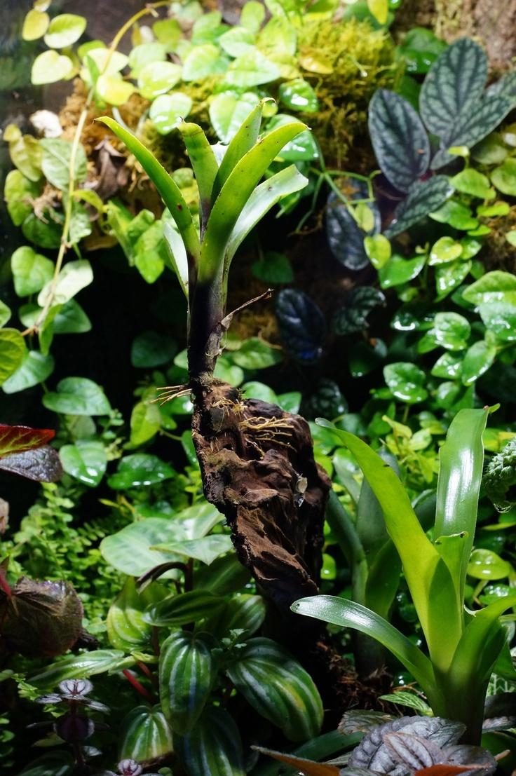 70 best driftwood - garden accents images on pinterest | driftwood