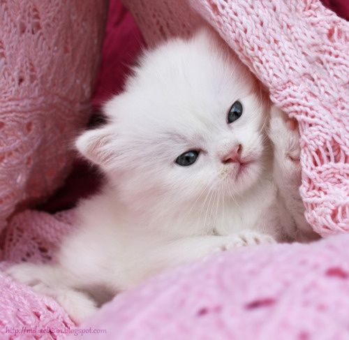 Little baby kitten Pets and things Pinterest