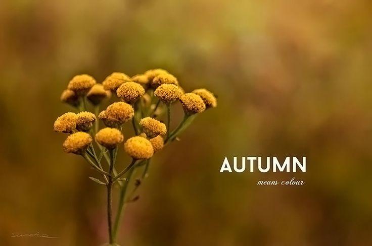 https://flic.kr/p/NM7oi3 | Autumn means colour