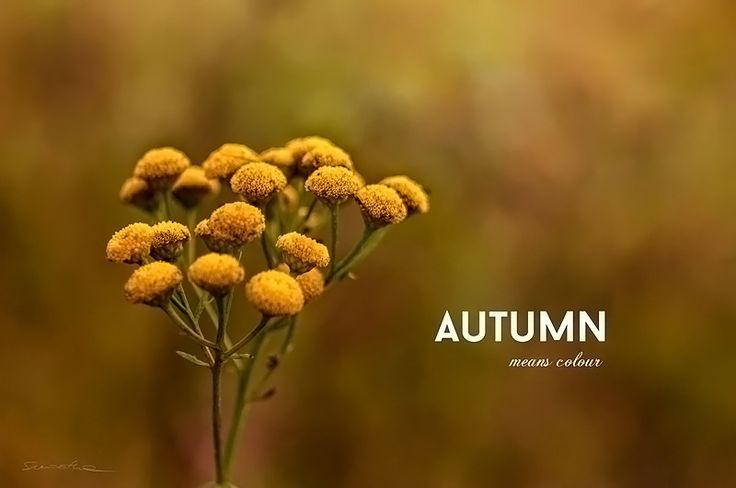 https://flic.kr/p/NM7oi3 | Autumn means colour