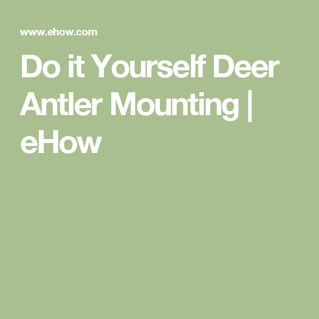 Do it Yourself Deer Antler Mounting   eHow