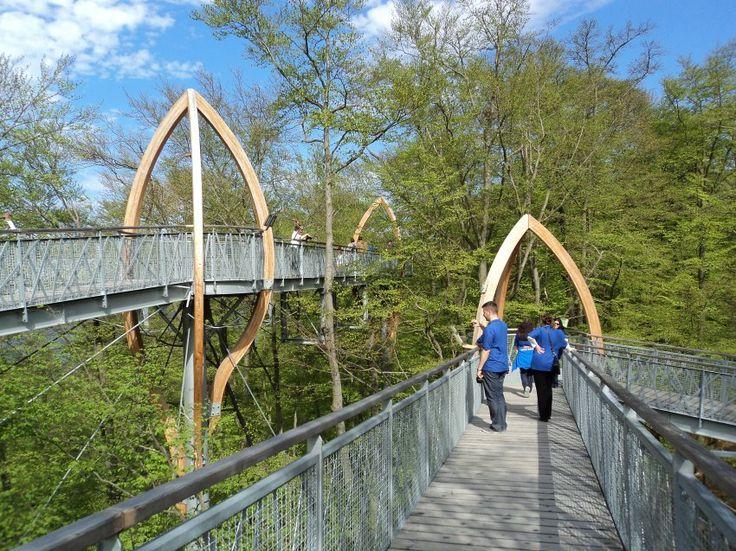 Im Nationalpark Kellerwald-Edersee gibt es geführte Touren auf dem Treetopwalk ….   – DreamCountry