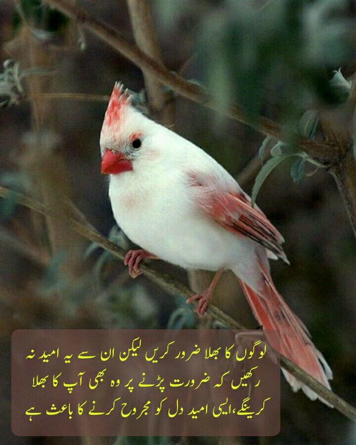 Pin By Manjit Singh On Birds Beautiful Birds Birds Animals