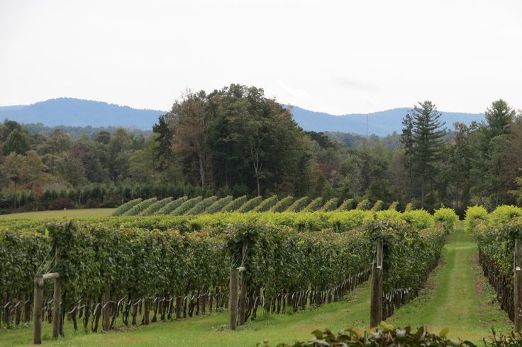 Western North Carolina wine country.  Burnt Shirt Vineyards.