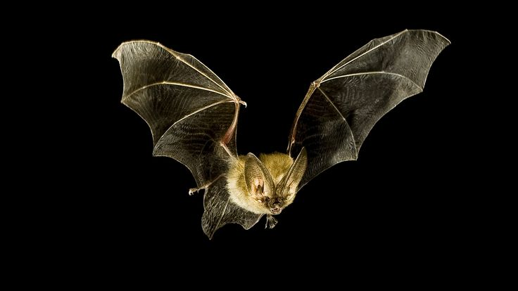 Bat-Inspired Tech Could Help Blind People See with Sound #technology #medical