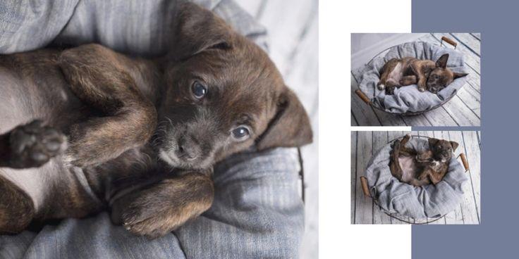 Ritratti, famiglia, neonati, cane, cucciolo, foto, Milano, Monza, Brianza, Siamobimbi