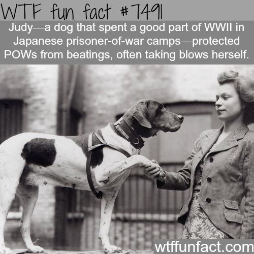 Judy the dog - WTF FUN FACTS