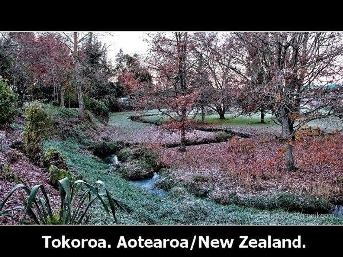 Tokoroa Whakauru Stream Winter Frost
