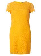Womens Petite Orange Lace Shift Dress- Orange