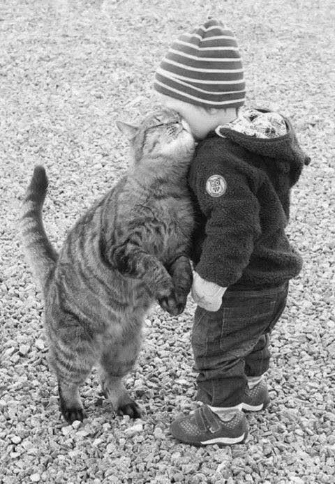 CAT & KID