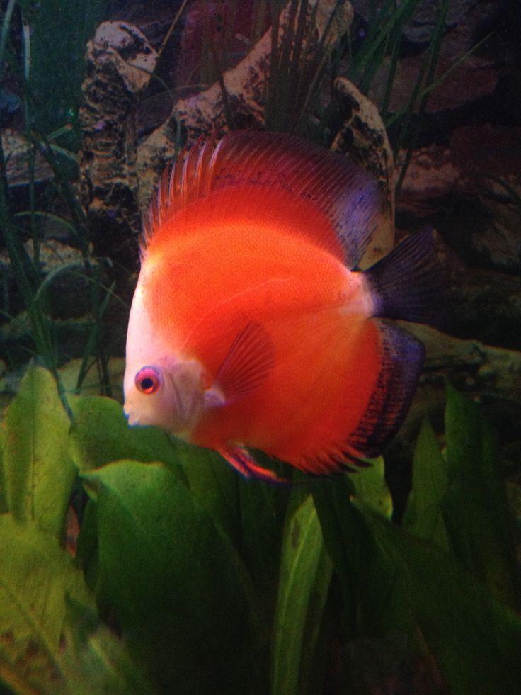 7 best Shrimp Love images on Pinterest | Shrimp, Aquarium fish and ...