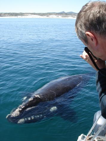 Hermanus - South Africa (whales) BelAfrique your personal travel planner - www.BelAfrique.com
