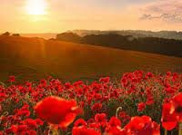 Image result for anzac day poppy