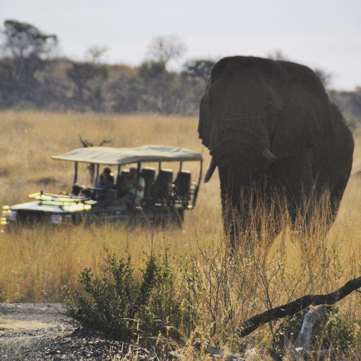 Safári na África do Sul: como escolher | MariCampos.com