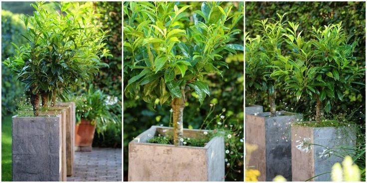 træer.jpg 800 ×400 pixels