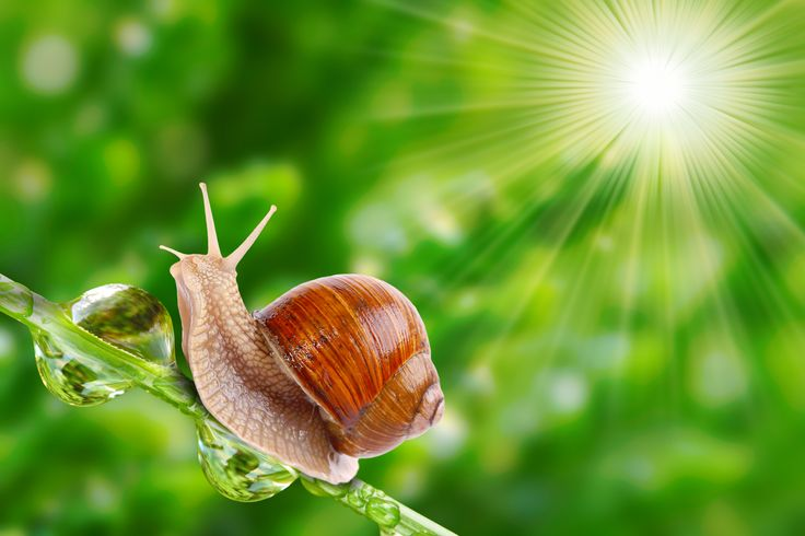 snail-and-drops-of-dew.jpg (5060×3374)