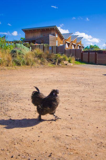 25+ best CERES Community Environment Park images by Holistic ...