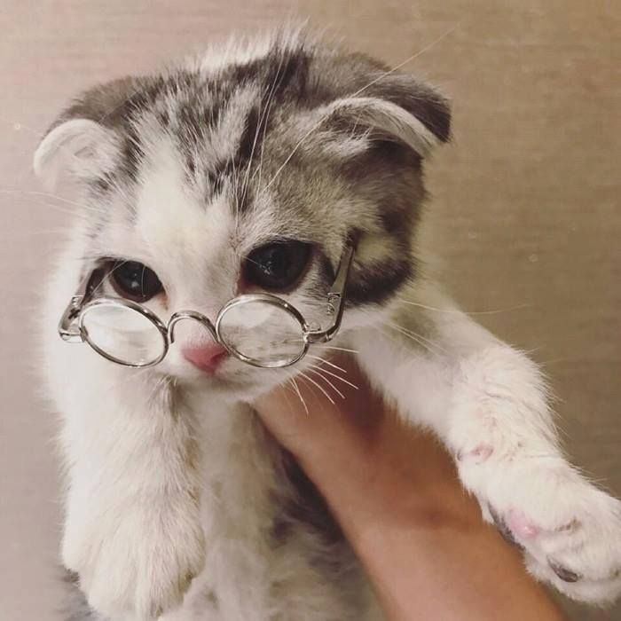 25357 Best Cats And More Cats Images On Pinterest Kitty