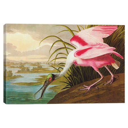 for my office?: James Of Arci, James Audubon, Roseata Spoonbil, Canvas Prints, Wall Artconstruct, Audubon Roseat, James D'Arcy, John James, Cotton Canvas
