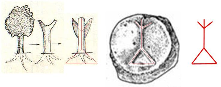 Pom al vieţii într-o reprezentare din secolul la XIV-lea e.n., pe fragmente din ceramică descoperite în Republica Moldova.