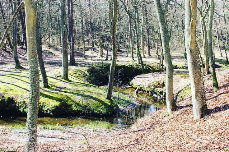 Creek in Orzechowo . . . #ustka #ustkanafali #orzechowo #igerspoland #igerseurope #igerseu #wearetravelgirls #girlslovetravel #ladiesgoneglobal #thetravelwomen #femmetravel #girlsborntotravel #travelcommunity #timeoutsociety #teamwanderlust #wltraveler #wanderlust #wonderful_places #beautifuldestinations #travel_drops #thevisualpassport #unfoldingroad #travelphotography #creek #forest #spring2017