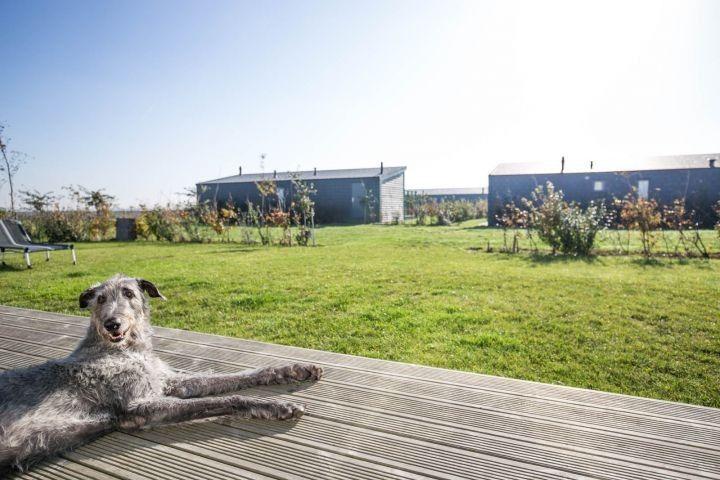 Https Www Hundeurlaub De Objekt 9694 Holland Niederlande Hundeurlaub Urlaubmithund Ferienmithund Reisen Ur Ferien Mit Hund Hundestrand Urlaub Mit Hund