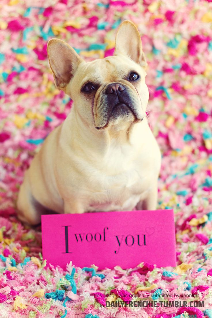 <3: Fabulous French, Pictures Ideas, Puppies, French Bulldogs, Fabu French, Cute Pics, Cute Pictures, Frenchi Obsession, Furry Friends
