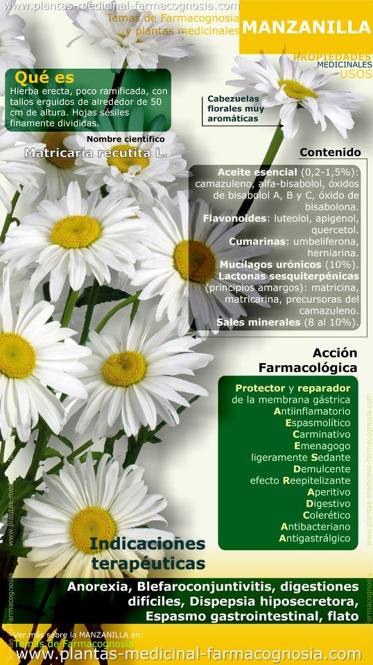 Propiedades y beneficios de la Manzanilla.Infografia - Farmacognosia. Plantas medicinales