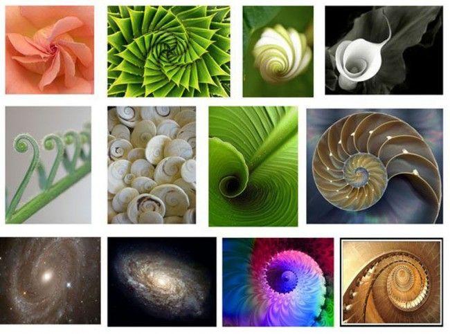 Exemplos de proporção áurea na natureza
