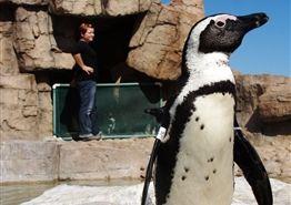 Penguin Rehab and Conservation - Port Elizabeth, South Africa
