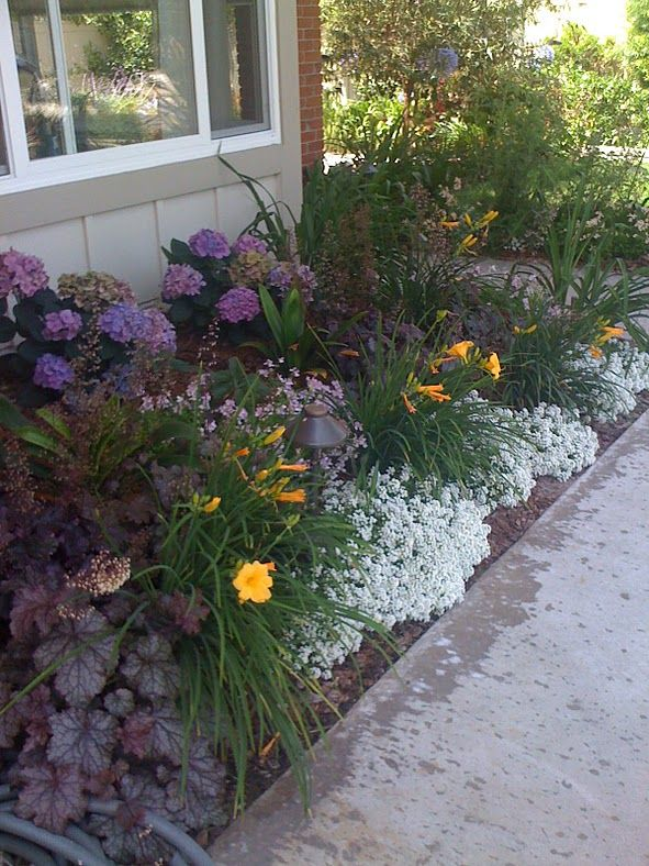 best 25 low water landscaping ideas on pinterest. Black Bedroom Furniture Sets. Home Design Ideas